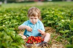Liten litet barnpojke på organisk jordgubbelantgård Royaltyfria Bilder