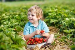 Liten litet barnpojke på organisk jordgubbelantgård Royaltyfri Foto