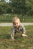 Liten litet barnpojke som äter det röda äpplet i fruktträdgård arkivbild