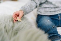 Liten litet barnpojkes hand med ett mellanmål arkivbild