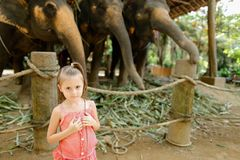 Liten lycklig flicka som står nära tämjde och bundna elefanter royaltyfri fotografi