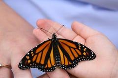 liten monark s för fjärilsbarnhand arkivbilder