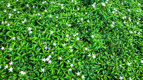 Liten mycket liten liten blomma Arkivfoton