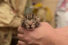 Liten nyfödd kattunge Royaltyfria Bilder