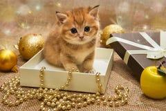 Liten orange kattunge med julgarnering arkivfoton