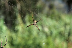 Liten Orb Weaver Spider på en rengöringsduk arkivbilder