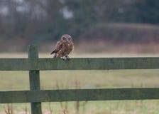 liten owl royaltyfri fotografi