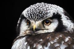 liten owl royaltyfria bilder