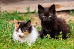 Liten päls- kattunge som två spelar i gård kattunge på grönt gräs, sund livsstil Arkivfoto