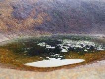 Liten pöl av vatten som fylls med alger med, vaggar i backgren royaltyfri foto