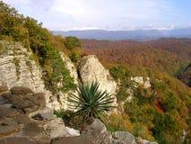 Liten palmträd i bergen Arkivbild