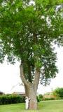 Liten pojke och stort träd Fotografering för Bildbyråer
