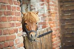 liten ponny Arkivbild