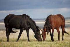 liten ponny för brun colt Arkivfoto
