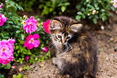 Liten pott, kattunge och rosa färgblomma Arkivfoto
