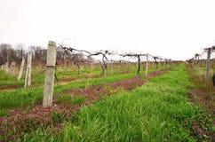 Liten privat vingård Arkivfoto