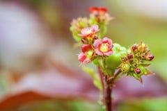 Liten röd blomma efter regn Royaltyfria Foton
