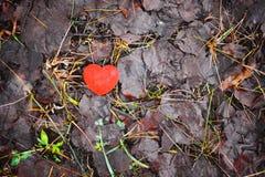Liten röd dekorativ hjärta på nedgång lämnar bakgrund Royaltyfria Bilder