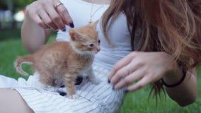 Liten röd gullig kattunge som spelar i grönt gräs med brunettflickan i en parkera arkivfilmer