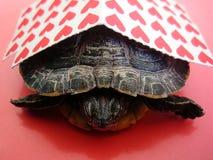 Liten röd pinnelegitimationshandlingar för Lsd med tryck för en tapet för sköldpaddabakgrundsmakro fina royaltyfria foton