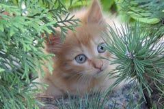 Liten rödhårig kattunge i den trädgårds- närbilden Arkivbilder