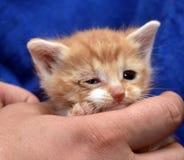 liten rödhårig man med en vit kattunge med ett sjukt öga royaltyfri foto