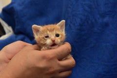liten rödhårig man med en vit kattunge med ett sjukt öga royaltyfria bilder