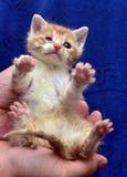 liten rödhårig man med en vit kattunge med ett sjukt öga arkivfoto