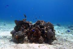 Liten riff i ett kristallklart vatten med fiskar royaltyfri bild