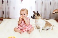 Liten rolig Caucasian flicka som barnet sitter hemma på golvet på en ljus matta med bästa vän av den halvblods- hunden med royaltyfria foton