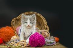 Liten rolig kattunge med en boll av handarbete arkivbilder