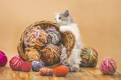 Liten rolig kattunge med en boll av handarbete i åtskilliga färger arkivbild