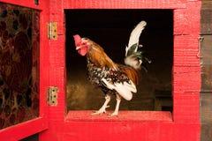 liten rooster royaltyfri fotografi