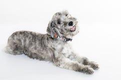 Liten söt hund royaltyfri foto