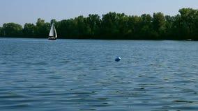 Liten segla yacht på floden på sommardag lager videofilmer