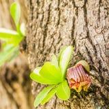 Liten sidor och blomma av det mexicanska kalebassträdet fotografering för bildbyråer