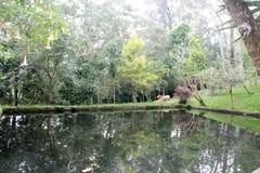 Liten sjö eller damm: Härlig reflexion av gröna träd i Royaltyfri Fotografi