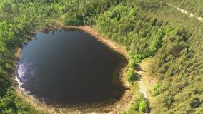 Liten sjö i den flyg- sikten för skog uppifrån lager videofilmer