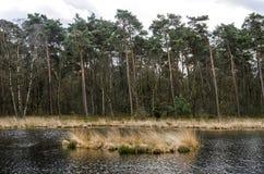 Liten sjö i en pinjeskog Royaltyfri Bild