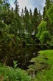 Liten sjö i grön skog Arkivfoto