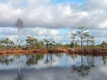 Liten sjö i hed royaltyfri bild
