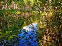 Liten sjö i skog Arkivbild