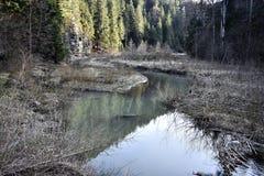 Liten sjö i skogen Fotografering för Bildbyråer