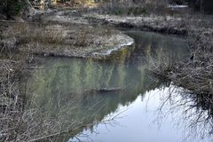 Liten sjö i skogen Arkivbild