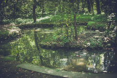 Liten sjö i skogen med den lilla stenön Arkivfoto