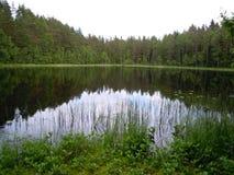 Liten sjö i skogen i sommar royaltyfri fotografi