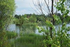Liten sjö med en ö i Ryssland royaltyfria foton
