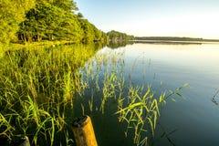 Liten sjö med vassen Royaltyfri Foto