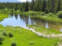 Liten sjö nära kanten av skogen Arkivfoto