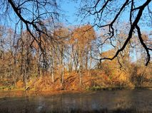 Liten sjö och härliga träd, Litauen Royaltyfri Bild